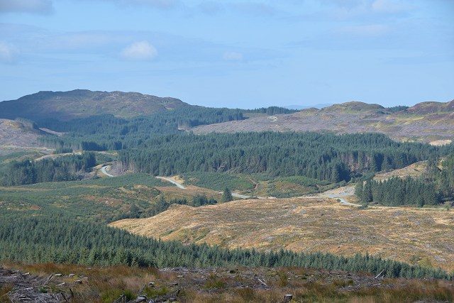 Clear-felling in Inverliever Forest