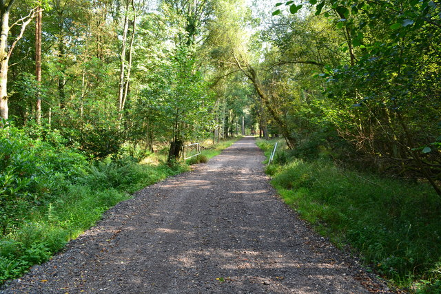 Forest track at Hamptworth