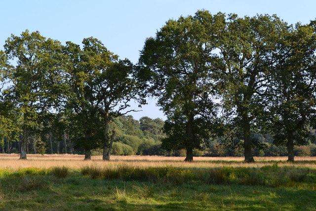 Woodland and fields near Redlynch