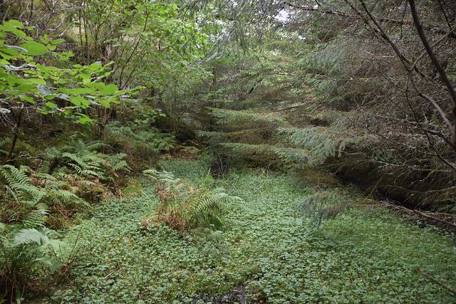 Boggy area in woodland
