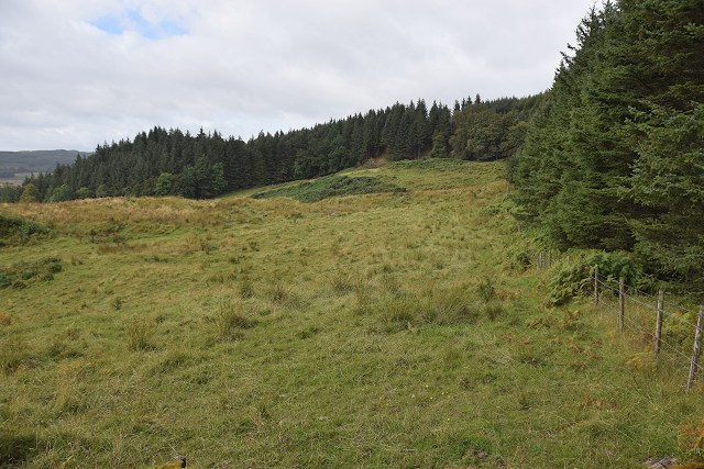 Woodland margin