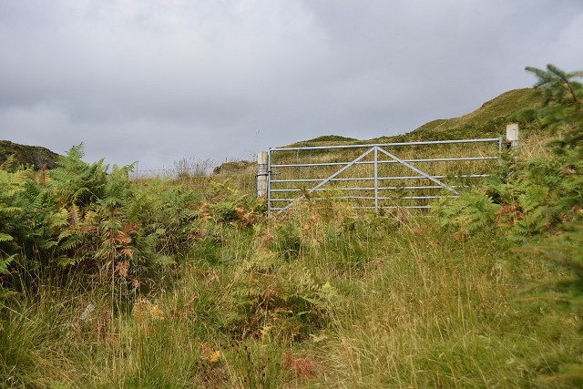 Gate at the edge of the forest