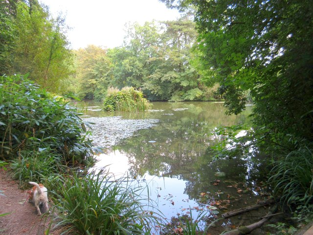 The lake - Wayford Woods