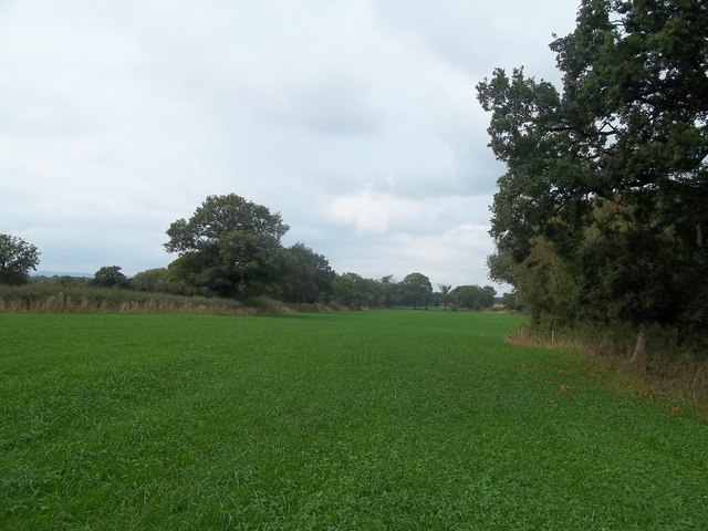 Footpath and Field near Rough Grounds