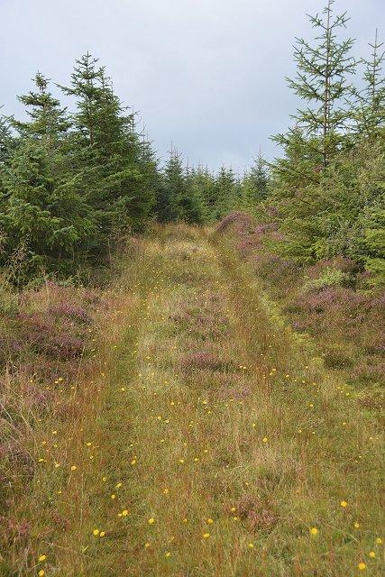 Forest road above Dunchraigaig
