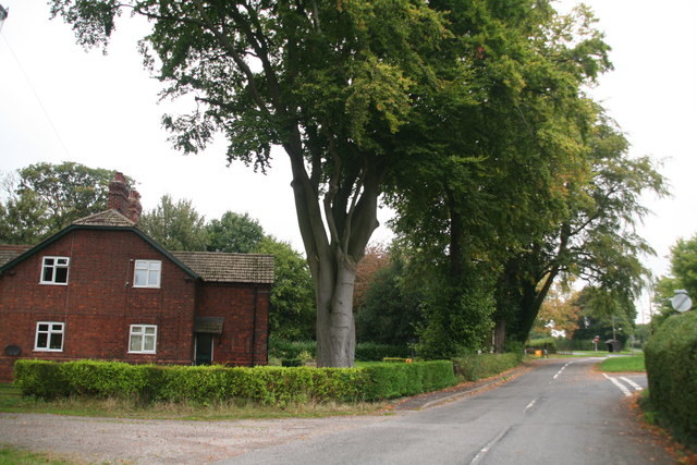 Scampton: High Street and an old beech tree