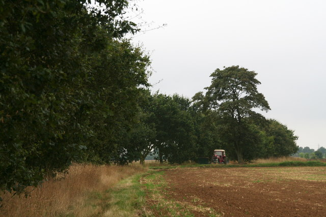 Oak walk to the A1500 from Scampton