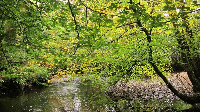 Leaves above the Bovey