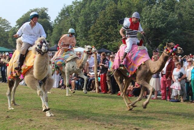 Camel Racing, Hole Park