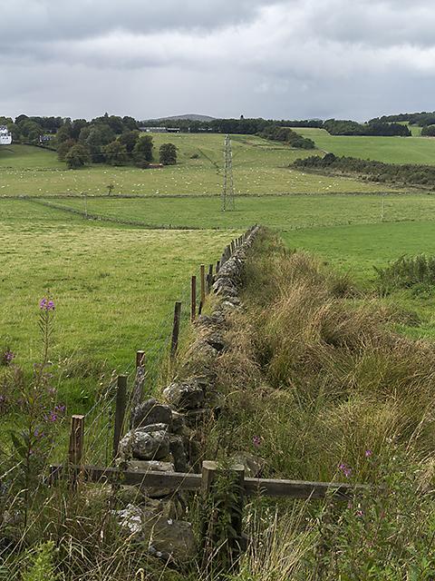 Field boundary west of Hardiston