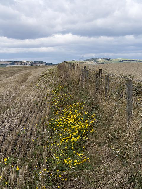 Farmland on the Howe of Fife