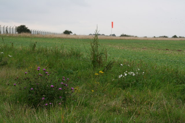 Wildflowers at the end of the truncated Ermine Street
