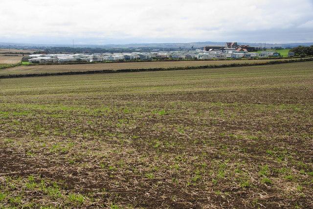 Clifftop field near Saltwick Nab