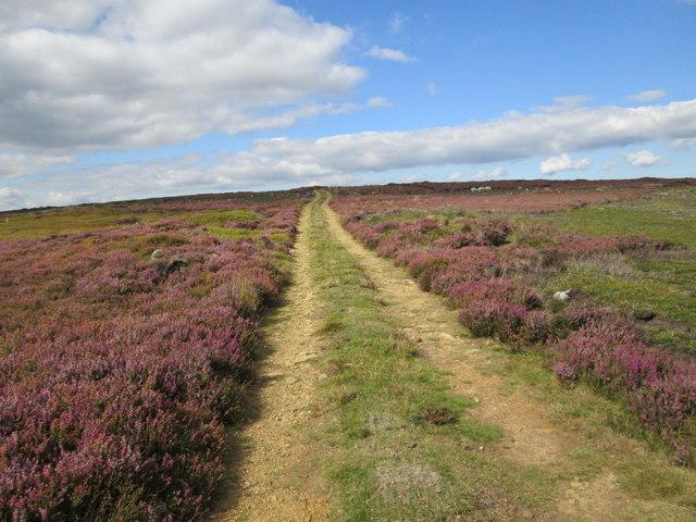 Track on Hutton Ridge
