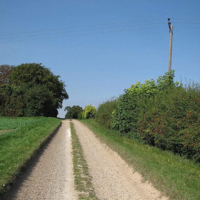 Near Rectory Farm in early September