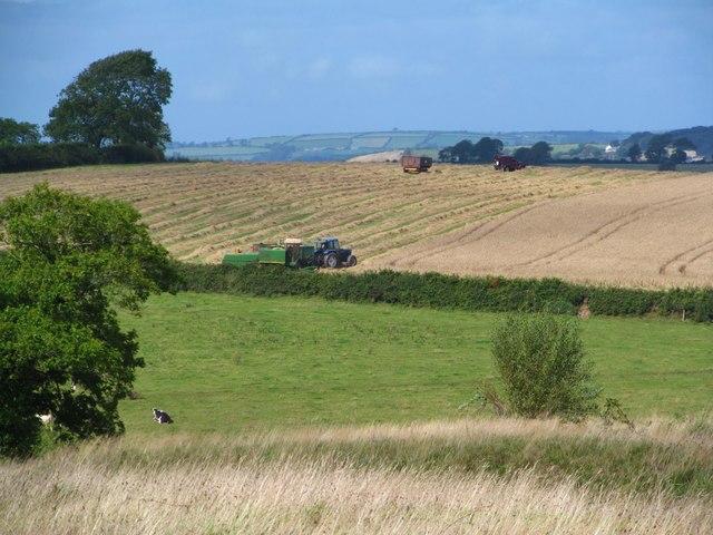 Harvesting near Llansteffan