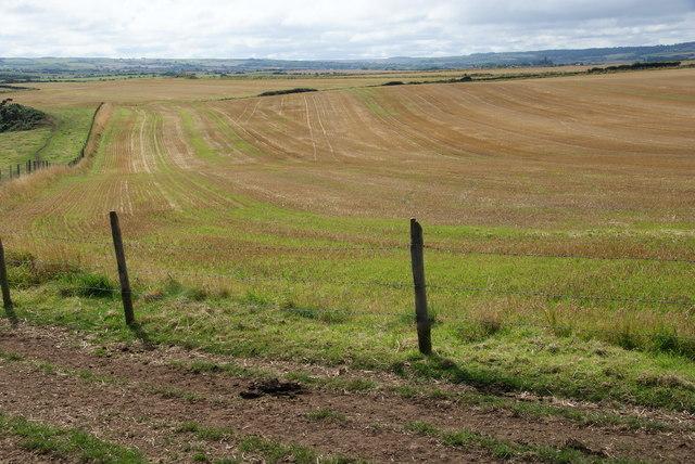 Harvested field near Widdy Head