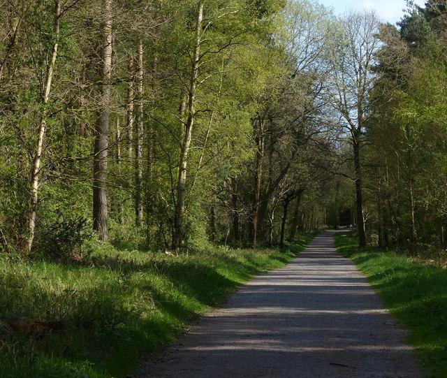 Path through Martinshaw Wood