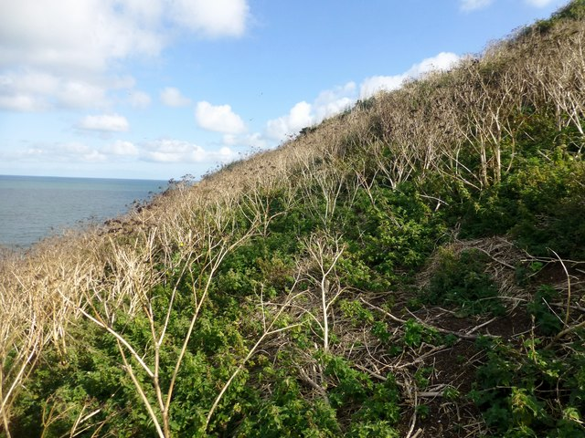 Steep Vegetated Slope On Puffin Island