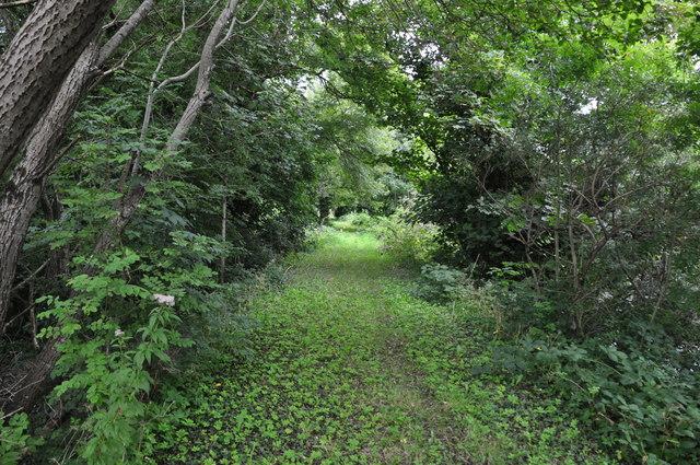 Bridgend : Grassy Path