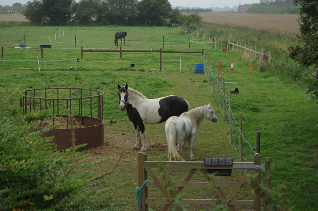 Horses and ponies near Wainfleet