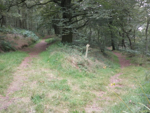 Path junction in West Hill Wood