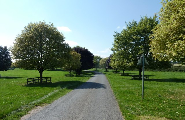 Maples and road near Fawley Court