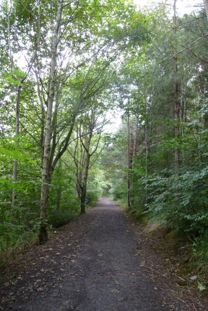 Bridleway along the Till