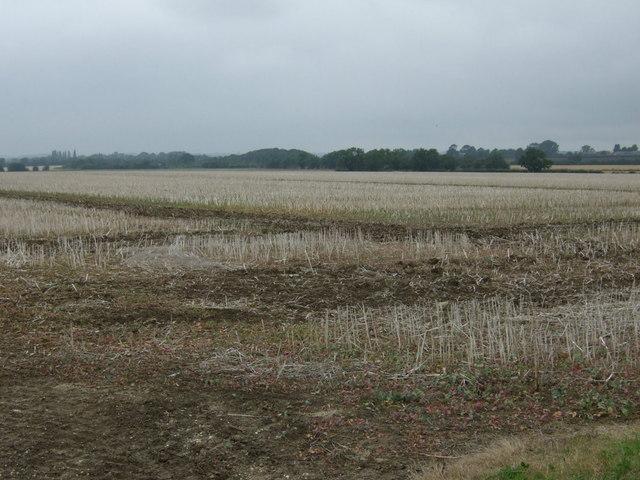 Stubble field, Swinthorpe