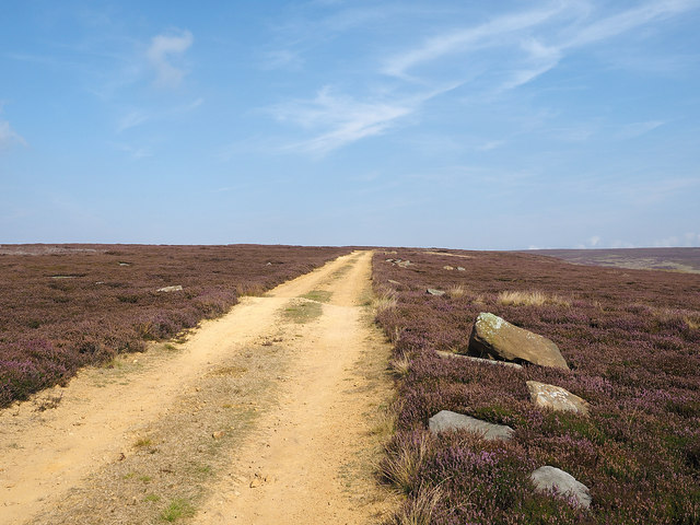 Estate road crossing heather moorland