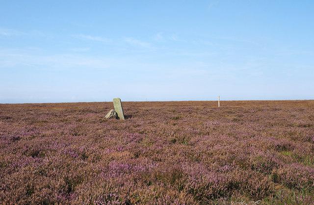 Stones on heather moorland