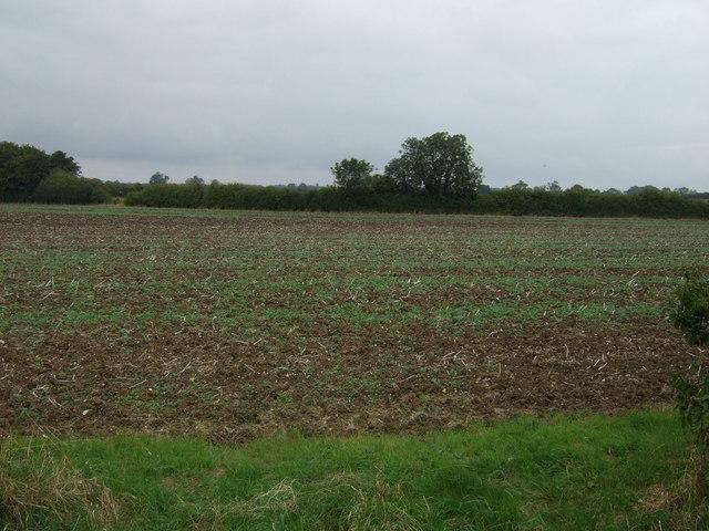 Farmland east of Buslingthorpe