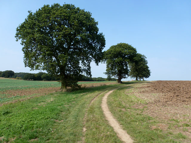 Footpath from Gusted Hall towards Hockley Woods