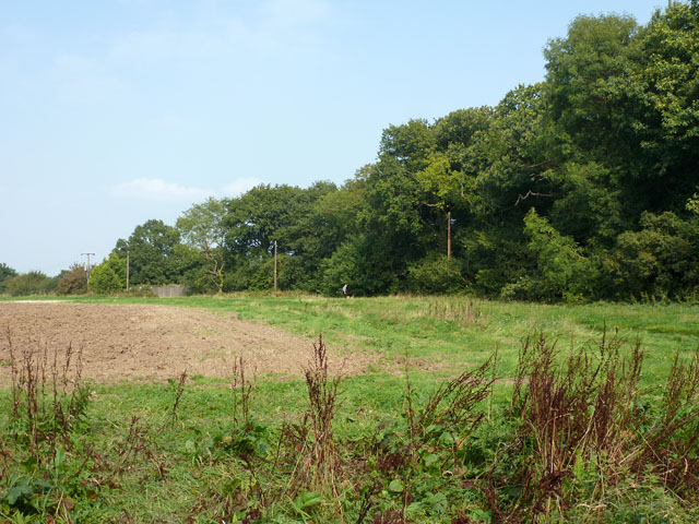 Gusted Hall Wood