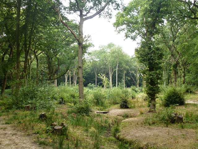 Coppice with standards, Hockley Woods