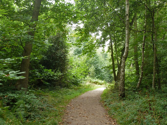 Path in Hockley Woods