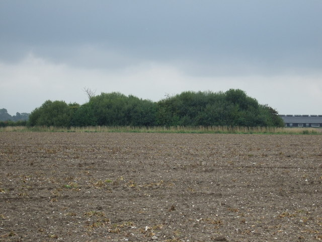Copse near disused airfield