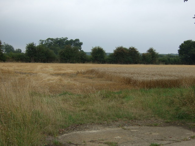 Partly harvested field