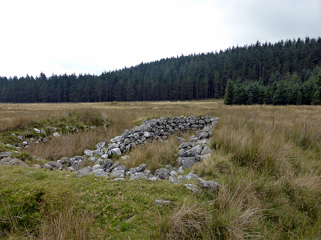 Ruined sheepfold at Bryn Glas