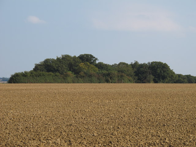 Looking over tilled land to a small wood near Tudwick Farm, Tolleshunt D'arcy
