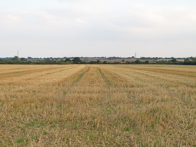 Harvested field near Lower Farm,Tolleshunt Knights