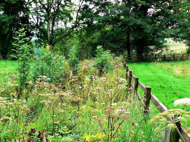 Eco-strip, Newark Park, Ozleworth, Gloucestershire