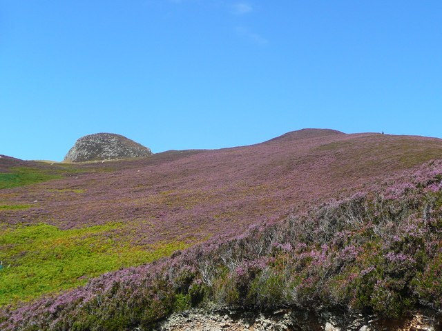 The bonnie blooming heather