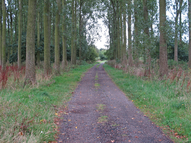 Track through the trees, near Vicarage Road, Laxfield