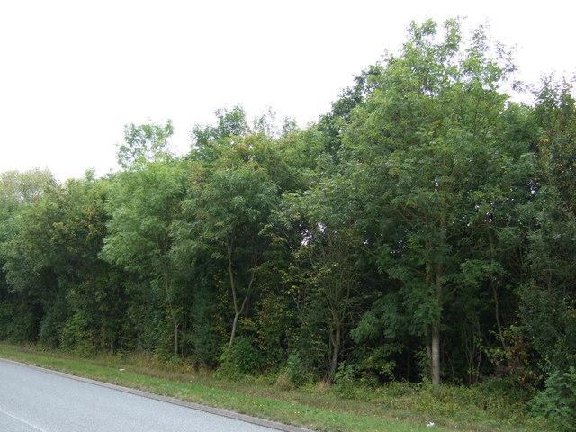 Rand Wood