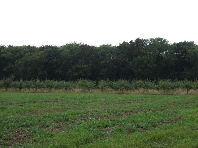 Farmland towards Stainton Wood
