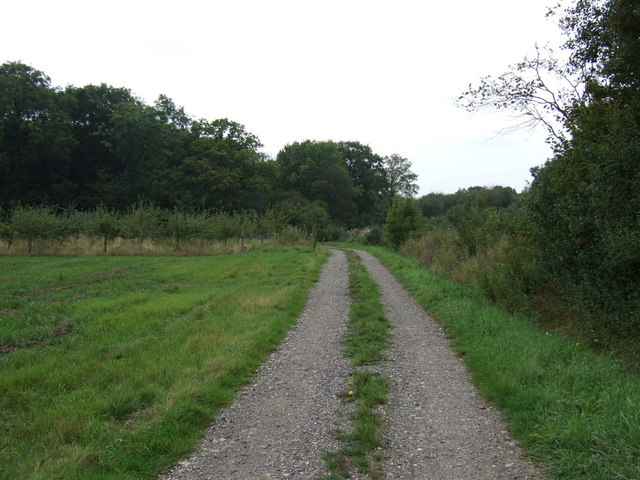 Track into Stainton Wood