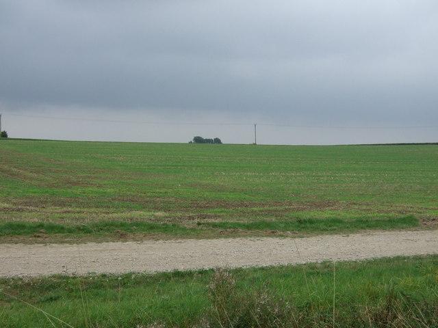 Farmland, Newball Grange