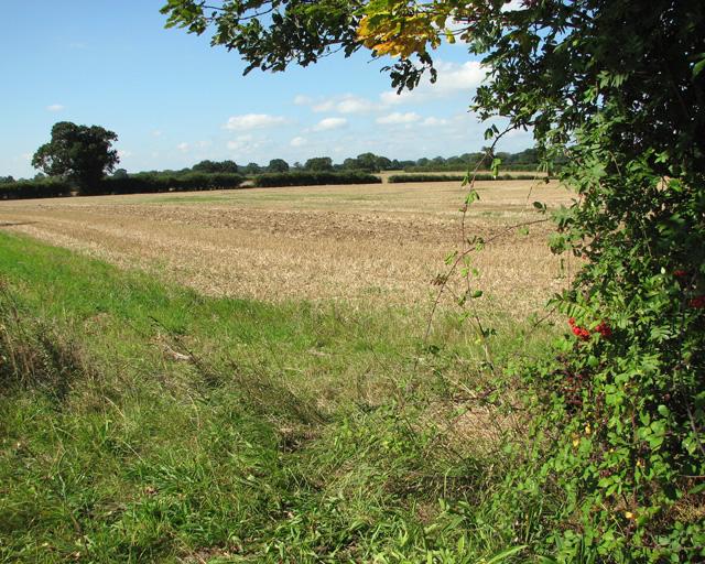 Stubble field by Burgh next Aylsham