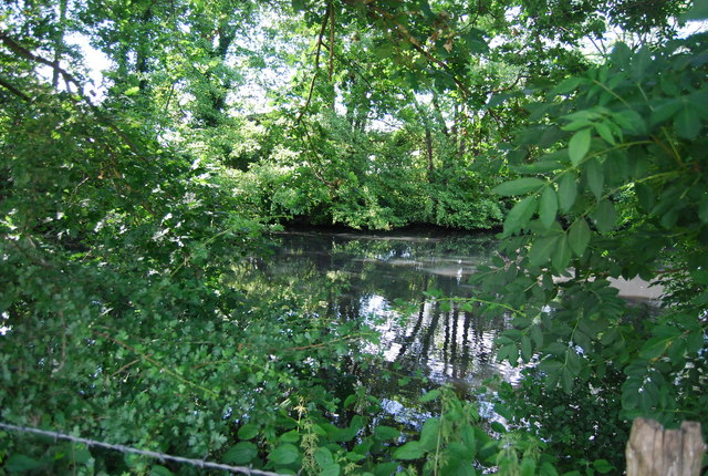 Wooded pond